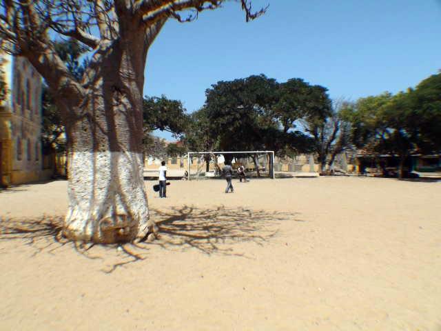 Football by the baobab tree