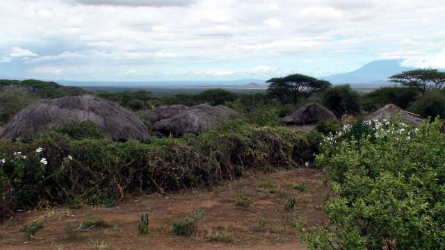 The distinctive thatched roofs of the boma